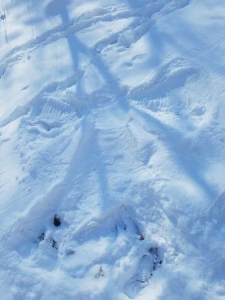 Snow angels! SciNatura.com